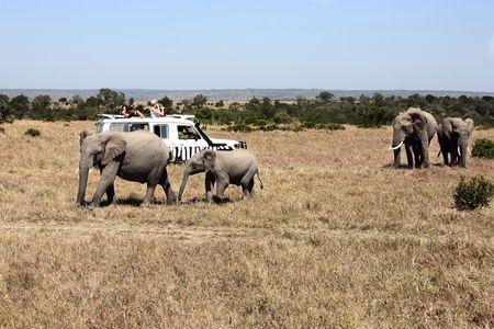 safari game drive with the elephants
