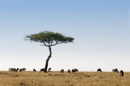 in the beautiful plains of the masai reserve in kenya africa Stockfoto - 121744480