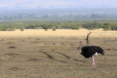 in the beautiful plains of the masai reserve in kenya africa Banque d'images - 121744481