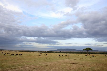 in the beautiful plains of the masai reserve in kenya africa Banque d'images - 121744485