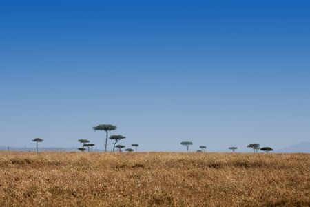 in the beautiful plains of the masai reserve in kenya africa Banque d'images - 121744491