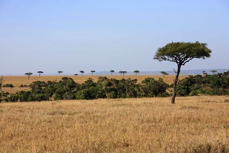 in the beautiful plains of the masai reserve in kenya africa