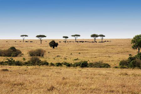en las hermosas llanuras de la reserva masai en kenia africa Foto de archivo