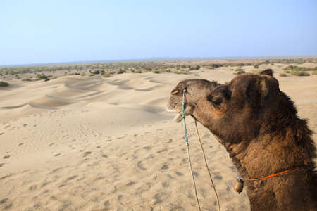 khuri dunes in thar desert near jaisalmer in rajasthan state in indi Stock Photo - 9823786