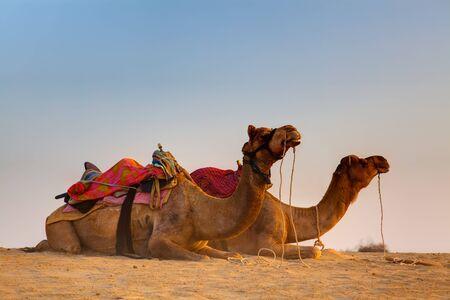 camel sitting khuri dunes in thar desert near jaisalmer in rajasthan state in indi Stock Photo - 9823729
