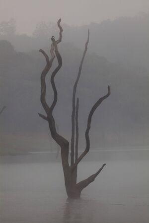 Periyar Lake Reserve in Kerala state indi Stock Photo - 9823672