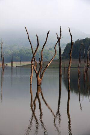 Periyar Lake Reserve in mumnar Kerala state india