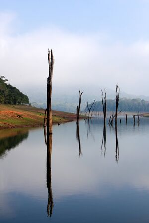 Periyar Lake Reserve in mumnar Kerala state india photo