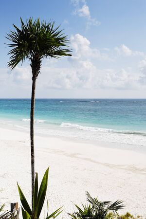 nice weather: view of the beautiful white sand beach with palm tree  of tulum in yucatan mexico Stock Photo