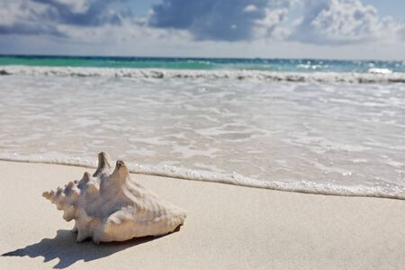 cabana: view of the beautiful white sand beach of tulum in yucatan mexico with a shell in the foreground Stock Photo