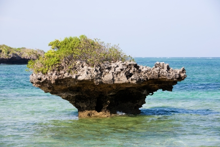 streetscene: coral reef rock out of the water in the beautiful chale island near mombassa kenya