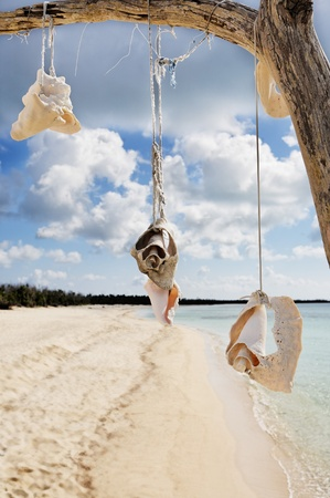 dead tree with shells on the beautiful  beach of cozumel island  yucatan mexico photo