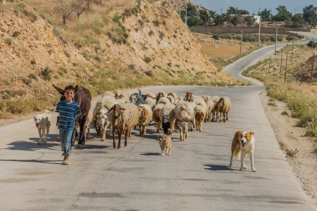 Al-Beidha, Jordan - May 9, 2013: young shepherd boy and  flock of sheep near Al-Beidha in Jordan middle east on may 9th, 2013 Stock Photo - 21486931