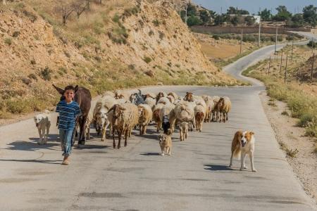 Al-Beidha, Jordan - May 9, 2013: young shepherd boy and  flock of sheep near Al-Beidha in Jordan middle east on may 9th, 2013 Stock Photo - 21486931