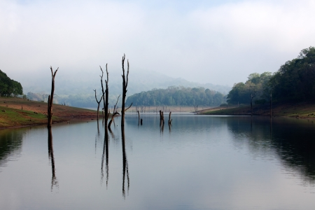 Periyar Lake Reserve in Kerala state india photo