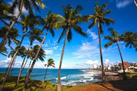 brazil beach: barra beach in the beautiful city of salvador in bahia state brazil