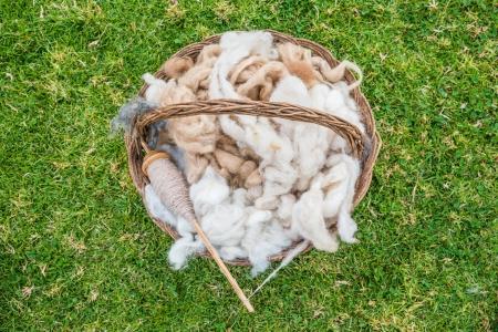 alpaca: alpaca wool in the peruvian Andes at Cuzco Peru