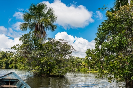 río amazonas: barco en el río en la selva amazónica peruana en Madre de Dios