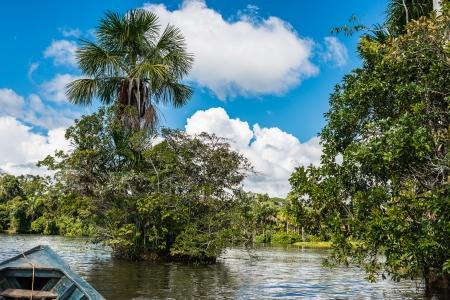 peru: boat in the river in the peruvian Amazon jungle at Madre de Dios