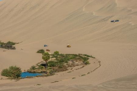 plantas del desierto: turistas con buggies en la costa peruana en Ica Perú