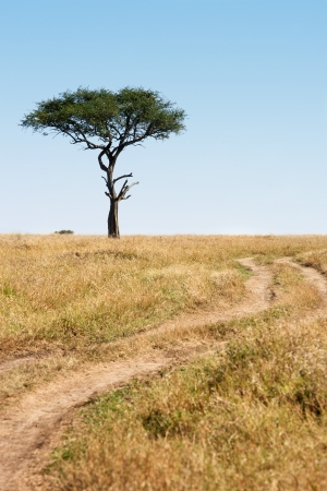 Trail and tree in the beautiful plains of the masai reserve in Kenya Africa photo