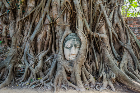Buddha Head in banyan tree roots  Wat Mahatha Ayutthaya bangkok thailand photo