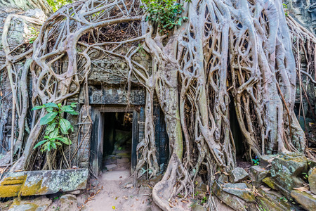 tree roots around door at ta prohm angkor wat cambodia photo