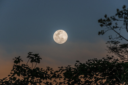 full moon in the peruvian Amazon jungle at Madre de Dios Peru photo