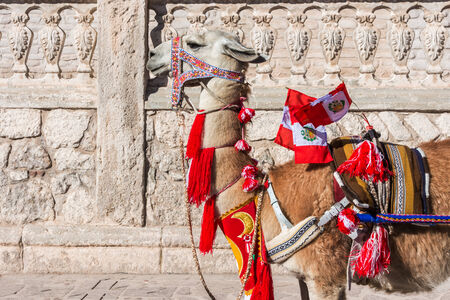 andean: Llama with peruvian flags in the peruvian Andes at Arequipa Peru Stock Photo