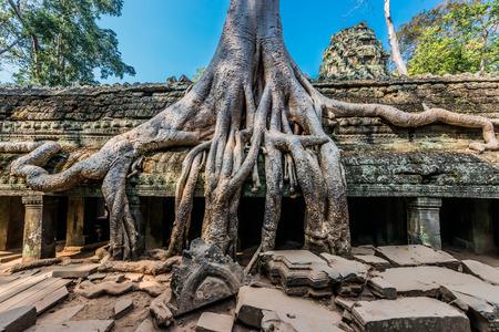 banyan tree Ta Prohm Angkor Wat Cambodia