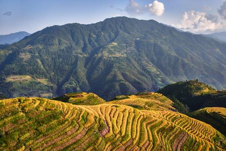 terraced: rice terraced fields of Wengjia longji Longsheng Hunan China
