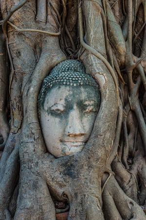 Buddha Head in banyan tree roots Wat Mahatha Ayutthaya Bangkok Thailand photo