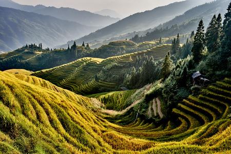 rijst terrasvormige velden van Wengjia longji Longsheng Hunan China Stockfoto