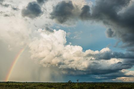 peru amazon: Amazon savannah in the peruvian Amazon jungle at Madre de Dios Peru