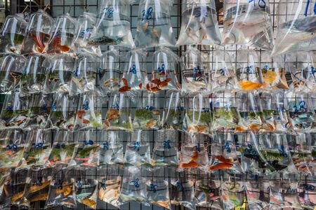 peces de colores: mercado de peces de colores Mong Kok Kowloon en Hong Kong