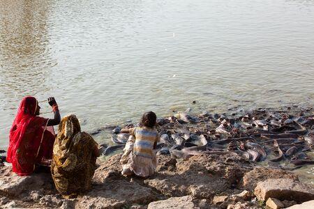 gad: catfish in Gad sagar tank near jaisalmer in rajasthan state in india