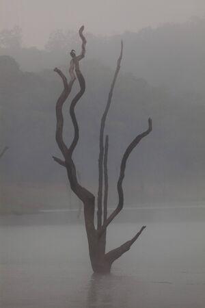 kerala: Periyar Lake Reserve in Kerala state india