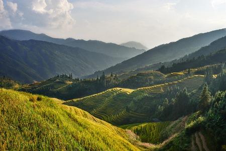 Rijst terrasvormige velden van Wengjia longji Longsheng Hunan China Stockfoto - 41427484