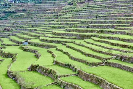 banaue batad rice paddy terrace fields Philippines Stock Photo