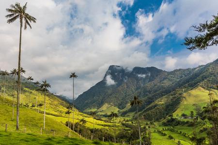 엘 Bosque 드 라스 팔 마 계곡에서 야자수의 풍경 콜롬비아에서 Salento Quindio 근처 Cocora 콜롬비아에서 남미