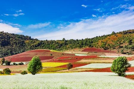 Bebouwde landvelden aangelegd in de buurt van Kalaw Shan-staat in Myanmar (Birma) Stockfoto - 90192538
