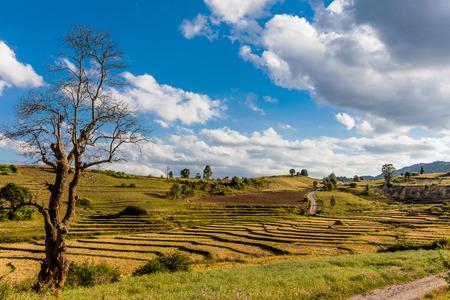 미얀마 (버마)의 칼루 산 (Kalaw Shan) 주 근처에서 경작 된 경작지.