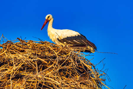 Stork Lori Berd Stepanavan Lorri Armenia landmark
