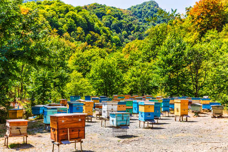 bees hives Tavush mountains Armenia