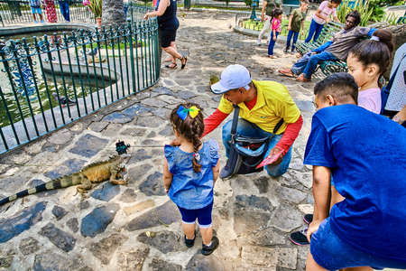Guayaquil , Ecuador- March 7 , 2020 : people children in Seminario Park playing with iguanas