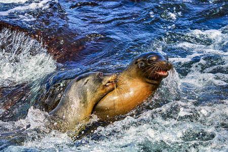 sea lion Galapagos Ecuador Stock Photo - 151530996