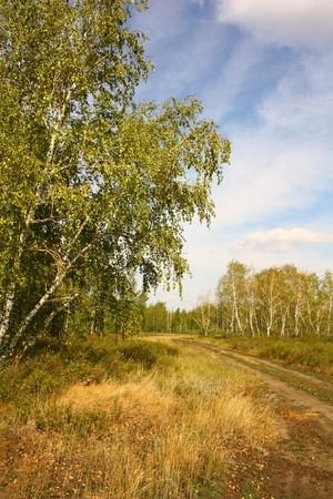 birch tree forest road vertical photo