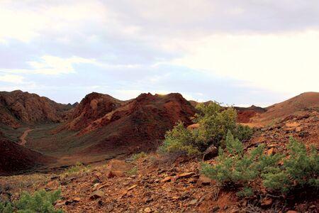 bush on a hot stone rock canyon photo
