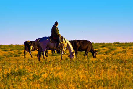 shepherd on a horse and two cows Stock Photo - 7734893