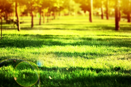 years of warm light on the green grass Stock Photo